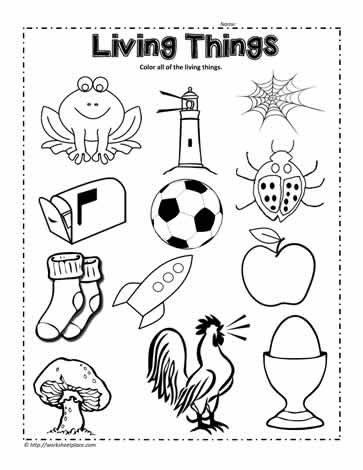 Circle the living things worksheet worksheets for Living and nonliving things coloring pages