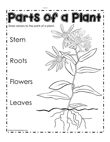 Parts Of A Plant Worksheets