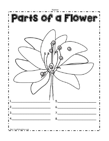math worksheet : parts of a plant worksheetsworksheets : Plant Worksheets For Kindergarten