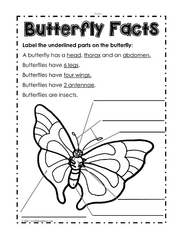 parts of a butterfly worksheets rh worksheetplace com Butterfly Anatomy Diagram Shark Diagram