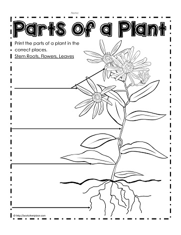 Printables Parts Of A Flower Worksheet parts of a plant worksheetsworksheets label the plant