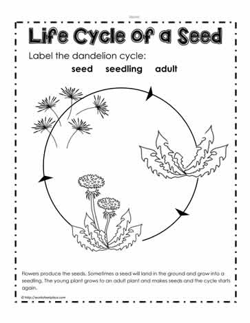 Worksheets Plant Worksheet parts of a plant worksheetsworksheets dandelion life cycle