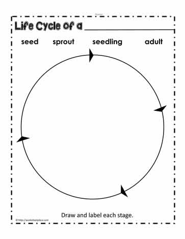 picture regarding Plant Life Cycle Printable called Plant Daily life Cycle Worksheets