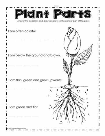 Parts of a Plant Worksheets Worksheets