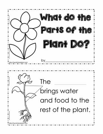 math worksheet : parts of a plant worksheetsworksheets : Parts Of A Book Worksheet Kindergarten