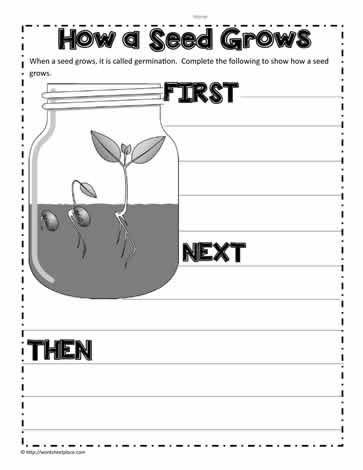 math worksheet : parts of a plant worksheetsworksheets : Life Cycle Of A Plant Worksheet For Kindergarten