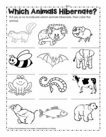 Animals That Hibernate Worksheets