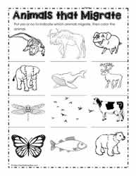 a math worksheets