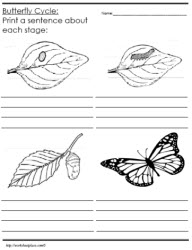 Worksheets Butterfly Life Cycle Worksheet life cycle of a butterfly worksheetsworksheets identify and describe the cycle