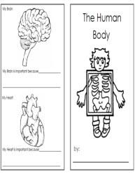 Worksheets Human Body Worksheets human bodyworksheets body booklet