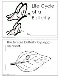 Life Cycle of a Butterfly Booklet