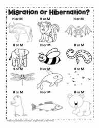 Hibernation Worksheets