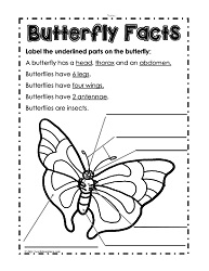 math worksheet : life cycle of a butterfly worksheetsworksheets : Butterfly Math Worksheets