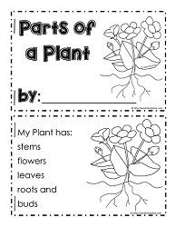 My Parts of a Plant Booklet