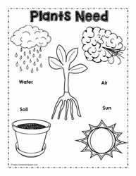 math worksheet : living and non living things worksheetsworksheets : Plant Worksheets For Kindergarten