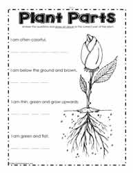 Worksheets Plant Worksheet parts of a plant worksheetsworksheets what are the parts