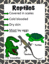 Animal Poster for Reptiles